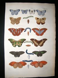Albertus Seba C1750 Folio Hand Coloured Antique Print. Butterflies 26